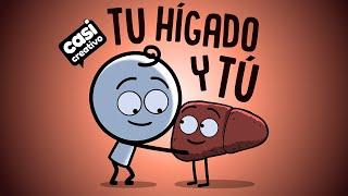 Tu hígado y tú | Casi Creativo