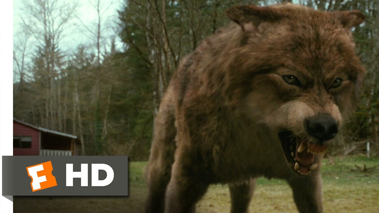 The Twilight Saga: New Moon (7/12) Movie CLIP - Jacob's ... Werewolf Twilight Jacob