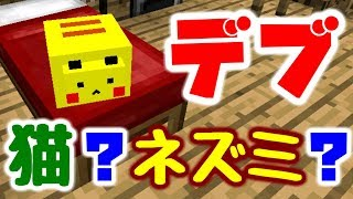 【マインクラフト】家具MODを追加してデブ猫と生活したい #1 デブ...猫?ピ〇チュウ??【マイクラ実況】 thumbnail