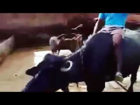 Pendu Punthe Pange -Vehli Janta -Funny...