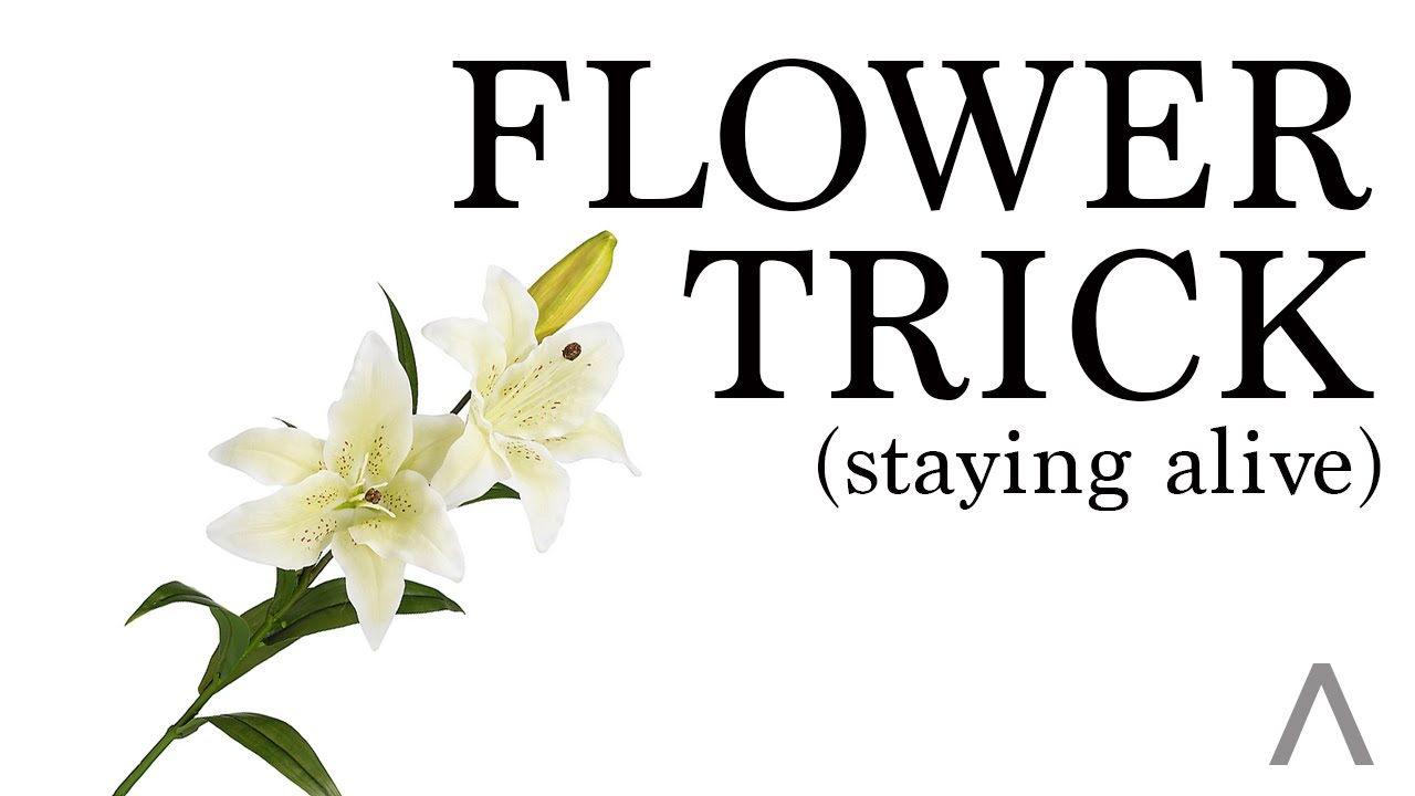 Modern-Alpha : How To Keep Flowers Alive - YouTube