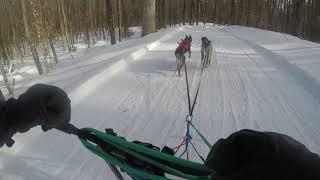 2019 Tug Hill Challenge 2 Dog Kicksled (Limbo Class)