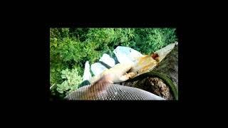 Cắt Mật  Một  Tổ  Ong  Trên  Cây Cao | Người Rừng Xứ Nẫu