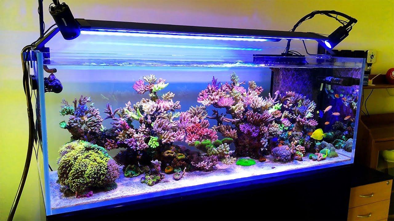 A Bonsai Coral Reef Tank In Australia Youtube