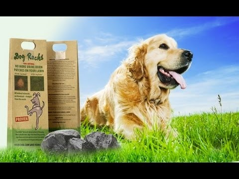 Dog Rocks - Burn Patch Preventor