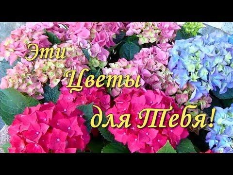 Красивые Цветы для Тебя💐Дарю Букет Цветов💐Цветы в Подарок