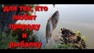 Душевный отдых по бездорожью Рыбалка летом Красивая Природа