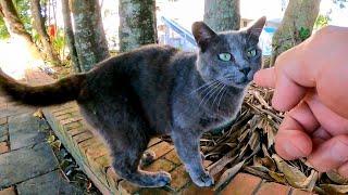 公園にグレーの猫がいたのでナデナデしたら黒猫と茶トラ猫もやってきた