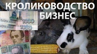 Кролиководство: разведение кроликов как бизнес от А до Я.(Анализируем разведение кроликов как бизнес в России, на Украине, СНГ. Ответ на вопрос, сколько можно заработ..., 2015-10-15T16:04:02.000Z)