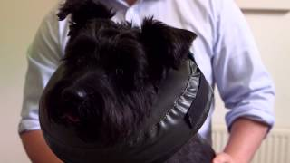 Thrive Comfy Collar - The Pet-friendly Alternative Collar