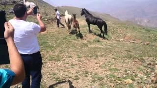Atların döyüşü