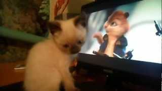 """котенок смотрит кино """"Элвин и бурундуки"""""""