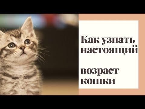 Возраст кошки по человеческим годам   меркам / Как считать возраст кошек?