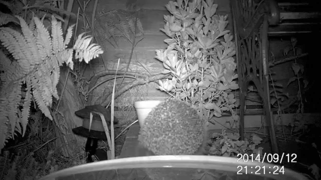 Autumn Watch - testing the Maginon WK3 HD wildlife camera | FunnyDog TV