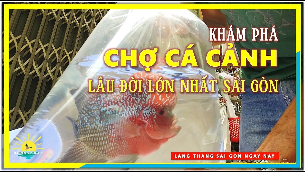 Khám phá CHỢ CÁ CẢNH Lâu đời & Lớn nhất Sài Gòn | lang thang Sài Gòn Chợ Lớn