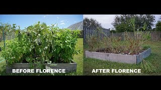 Before and After Hurricane Florence: My Home and Garden in Leland, NC
