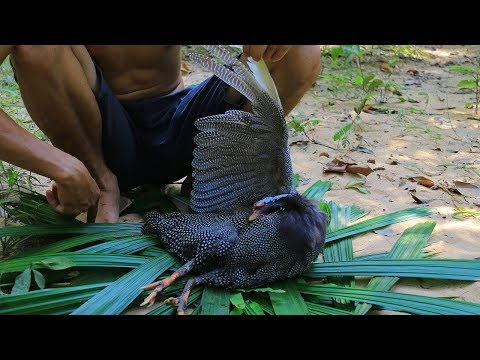 Amazing Guinea Fowl Recipe - Slingshot Hunting Guinea Fowl In Forest Than Cooking For Dinner