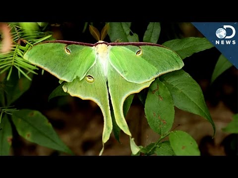 The Stealth Fighter Of The Insect World