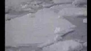 Whale Antarctica 1991