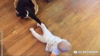 Babies and cats--- Funny videos