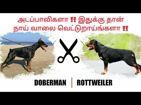 3 Reasons !! for Rottweiler, Doberman Dogs TAIL CUTTING | தமிழ் | Petflix Tamil