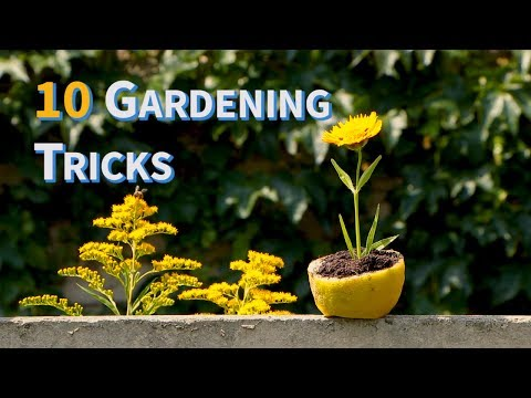 Garden Tips and Tricks [ManoMano UK]