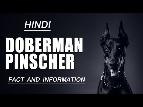 Doberman Pinscher Dog Facts & information | Hindi | Dog Facts & information | Pet info
