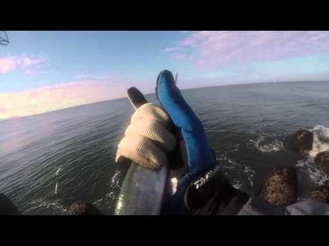 Pesca ao Spinning Portugal SlowMotion