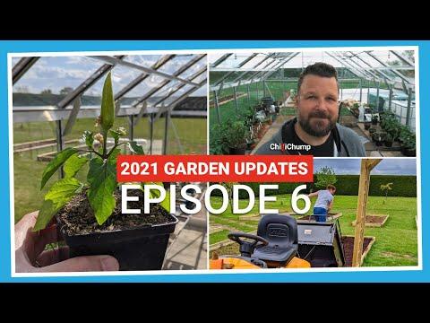 Chilli plants and raised vegetable beds progress! (2021.E06 Garden Updates)