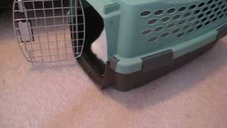 Crate Training A Cat