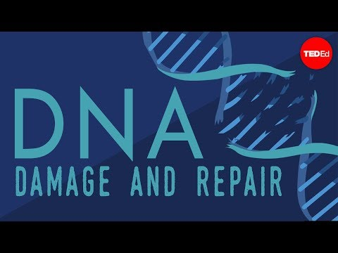 What happens when your DNA is damaged? - Monica Menesini