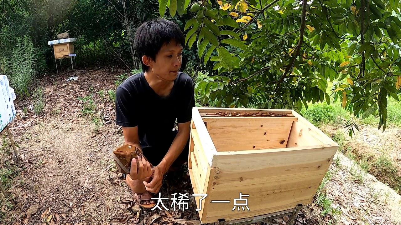 【真過癮】绵绵阴雨终于晴了,小伙给蜂群补充些花粉浆,让工蜂积极哺育幼虫