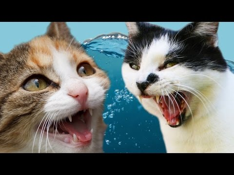 Thumbnail: Cats Vs. Water