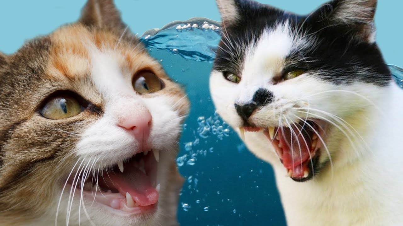 cats vs water youtube
