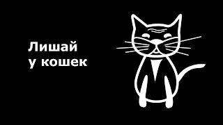 Микроспория, стригущий лишай у кошек.