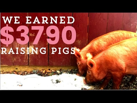 Make Money with Pastured Pigs