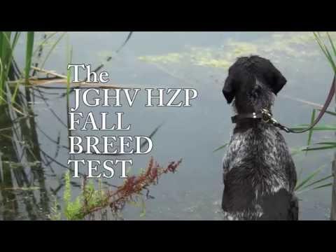 JGHV HZP Fall Breed Test TRAILER