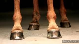 Клип конный спорт(chocolata)