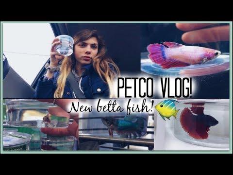 PETCO VLOG!! GETTING MY NEW BETTA FISH!