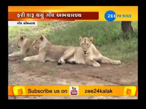 Gir Somnath: Gir Forest National Park open for Tourists today #ZEE24KALAK