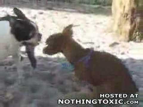 Horny dog jerks himself off!