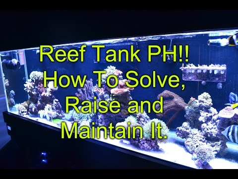 PH!! How To Solve, Raise and Maintain It In A Reef Tank