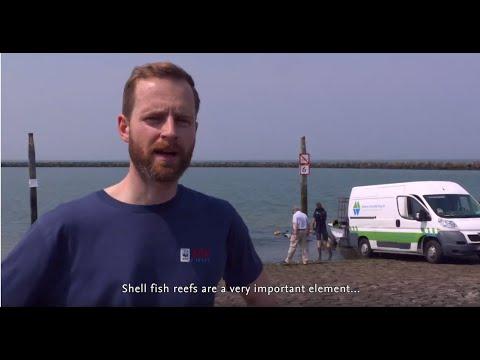 Shellfish Reefs In The North Sea