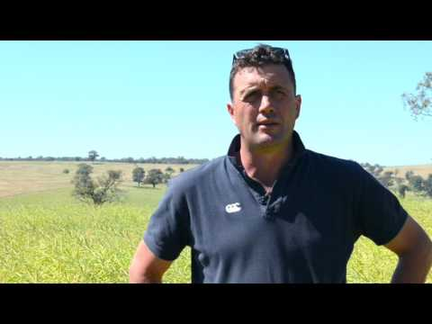 Next generation canola option a success at Greenethorpe, NSW
