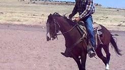 "Springerville, AZ  Colt Starting:  ""dun it"":  loping/stop 14 rides"