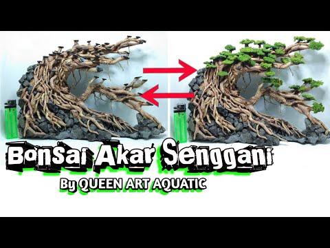 bonsai-aquascape-akar-senggani-hardscape-by-queen-art-aquatic