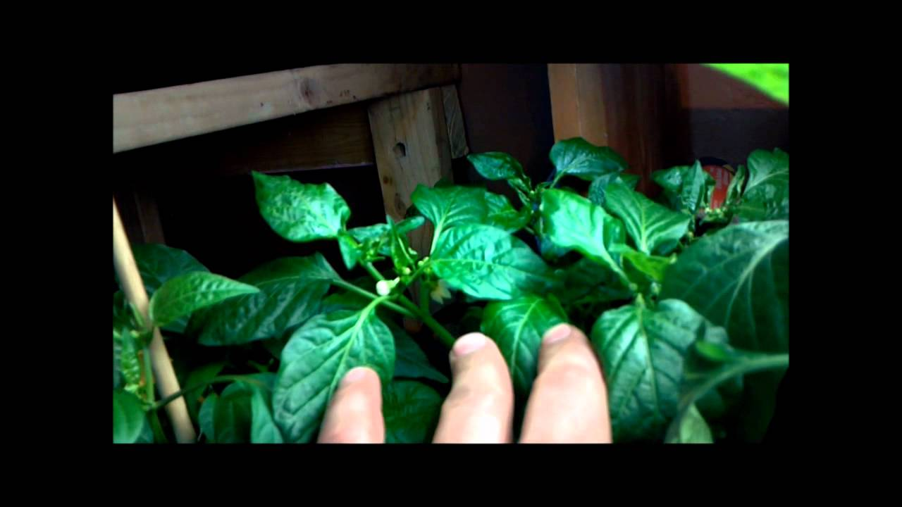 winter indoor hydroponic soil and soilless garden update 3 4 12