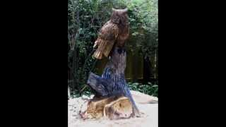Owl Chainsaw Carving Under 3 Minutes