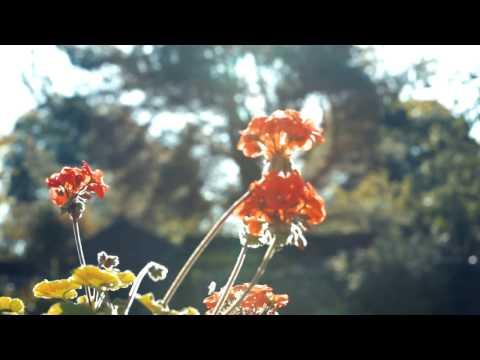 Essence - Cameron Robertson