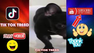 Funny Cute Animals 藍 Animal Kingdom Videos Funny